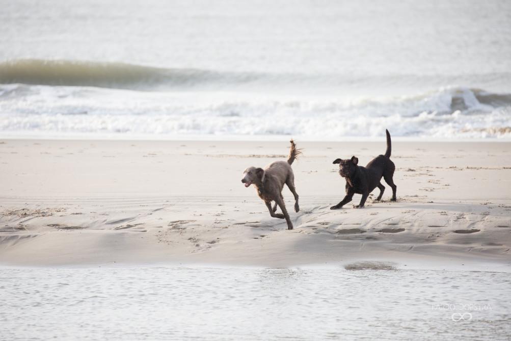 Het strand is een prima plek om vrienden te maken! Ik vind de houding van de zwarte hond rechts fantastisch, met die oortjes zo vooruit :)