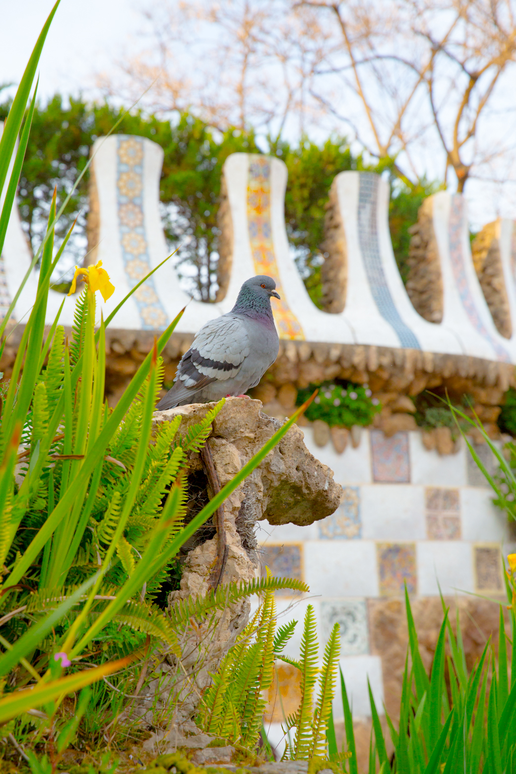duif in Park Guell Gaudi Barcelona