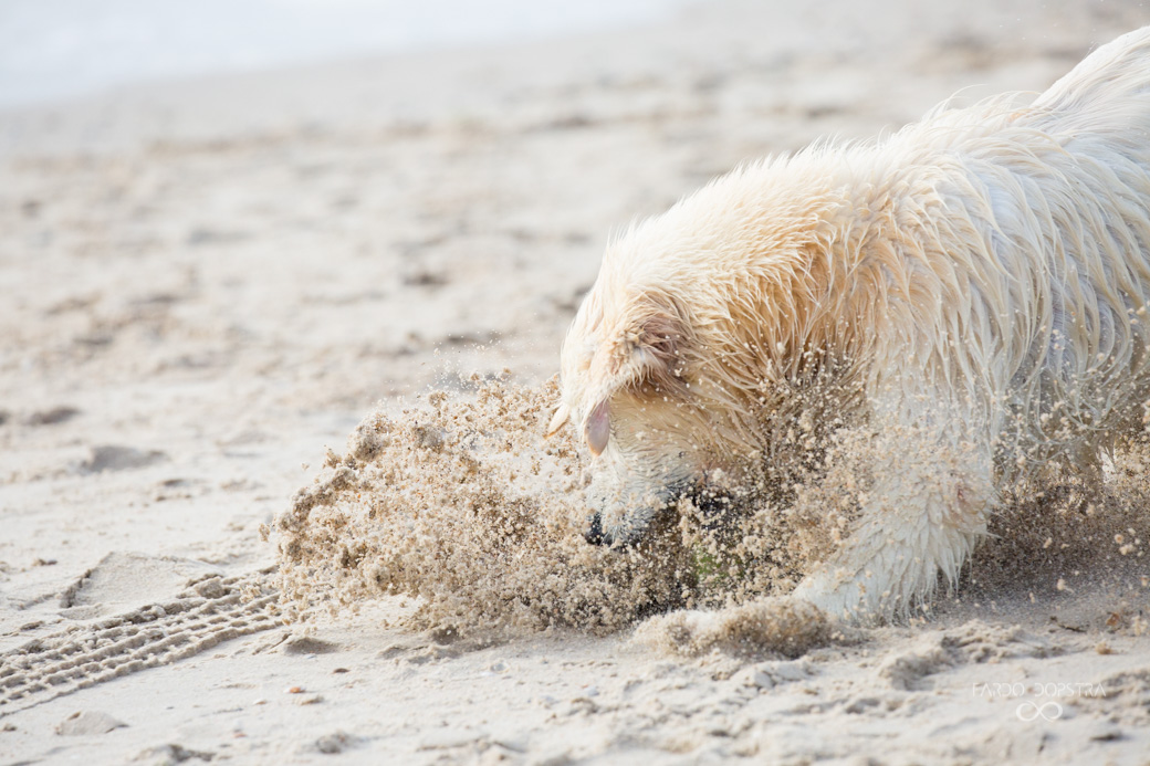 Fotoshoot met je hond in Callantsoog