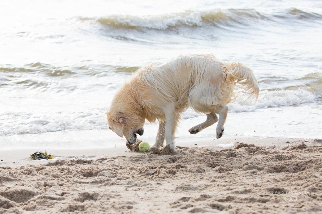 Hond foto shoot strand Callantsoog