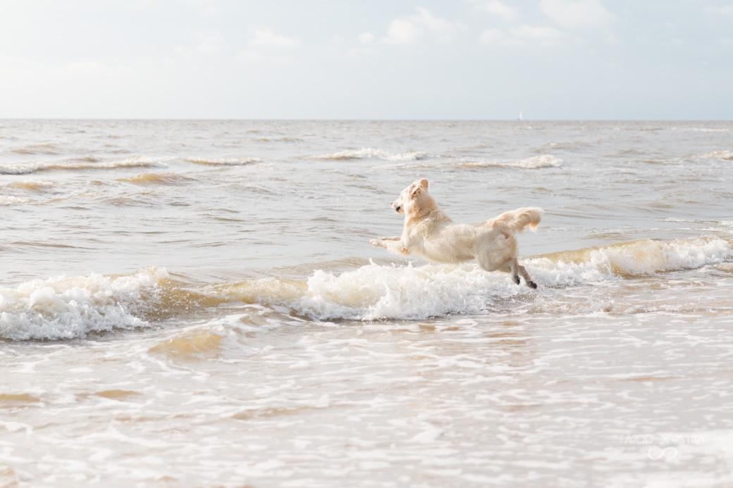 Foto shoot hond aan zee Callantsoog