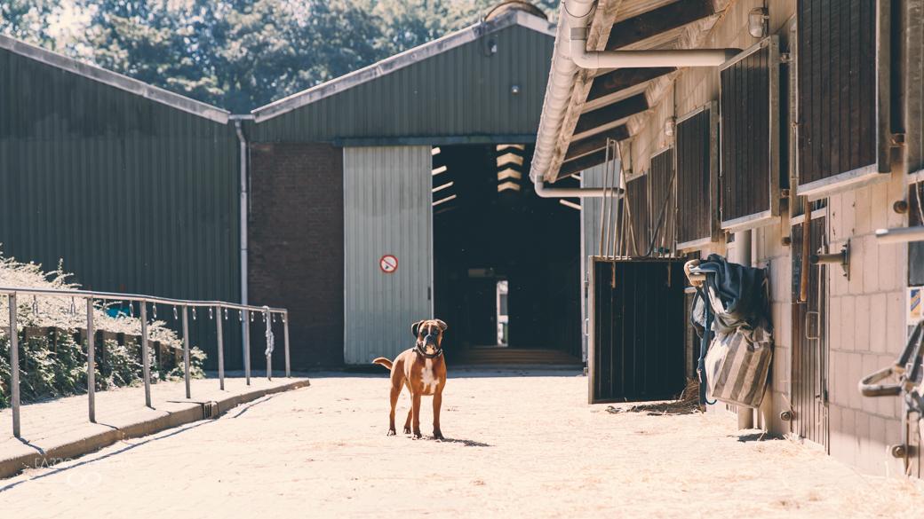 Hond Manege