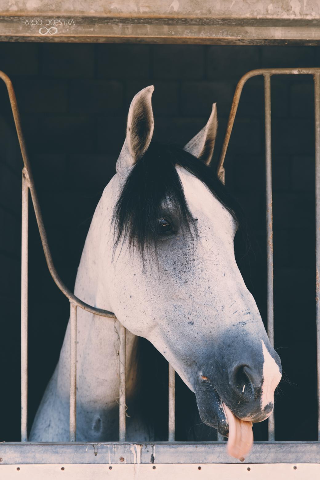 Paardenfotografie Groningen