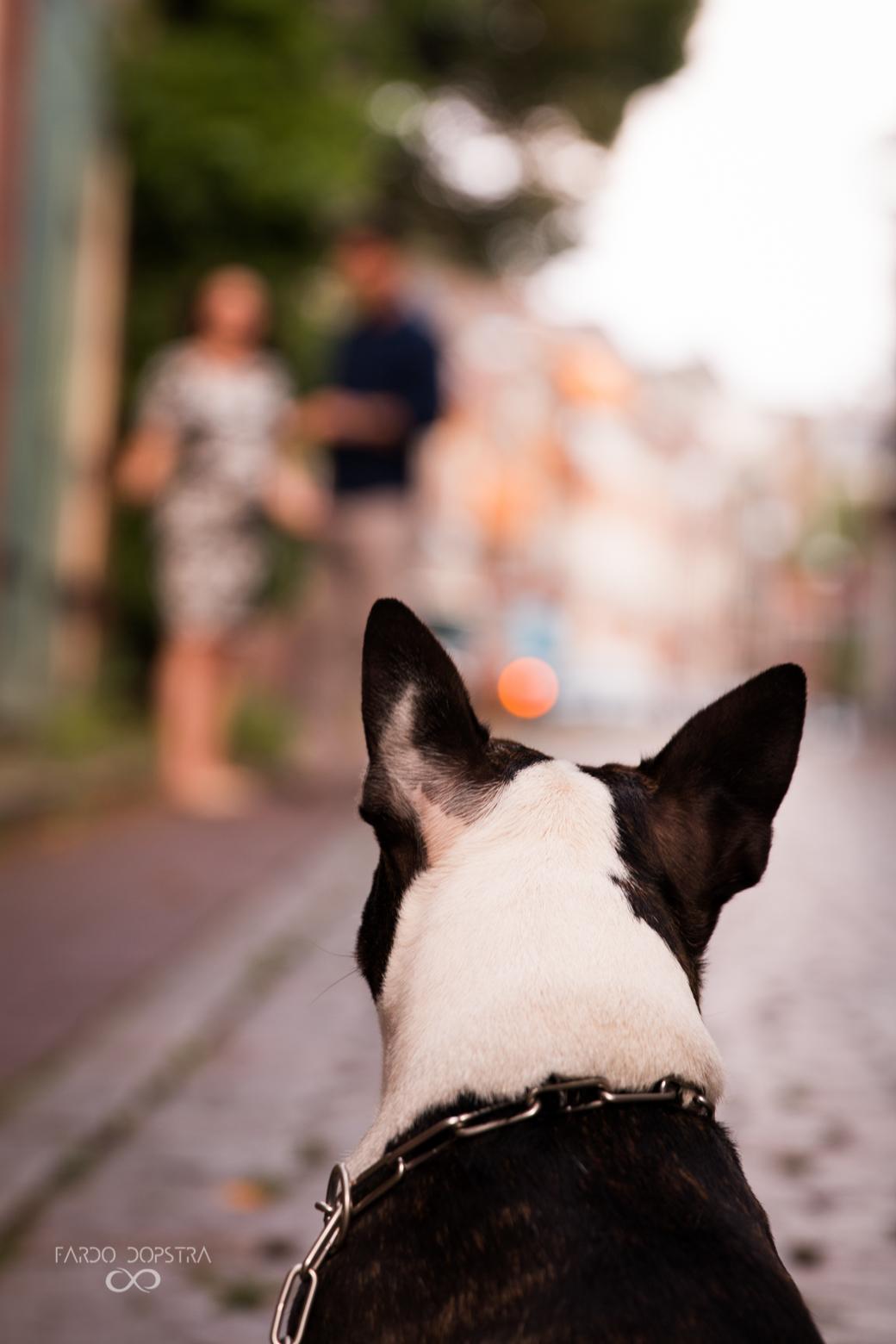 Dierenfotograaf Groningen