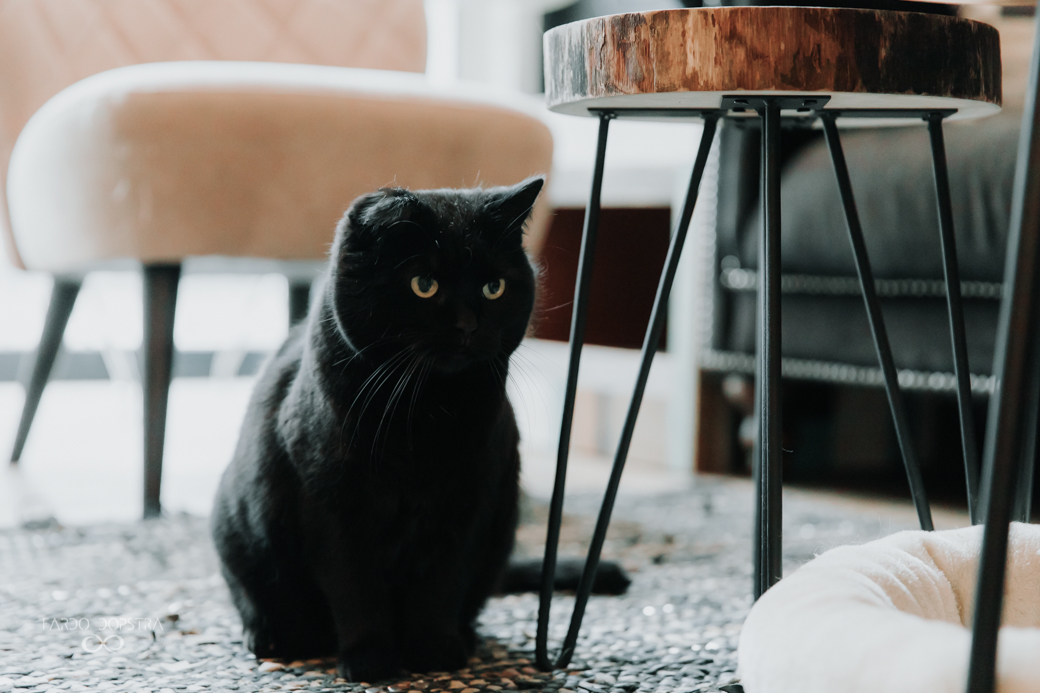 De titel van deze blog zou gemakkelijk kunnen zijn: tien redenen waarom Kattencafé Op z'n kop een van de leukste plaatsen van Groningen is.