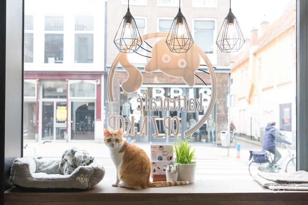 Fotograaf Groningen