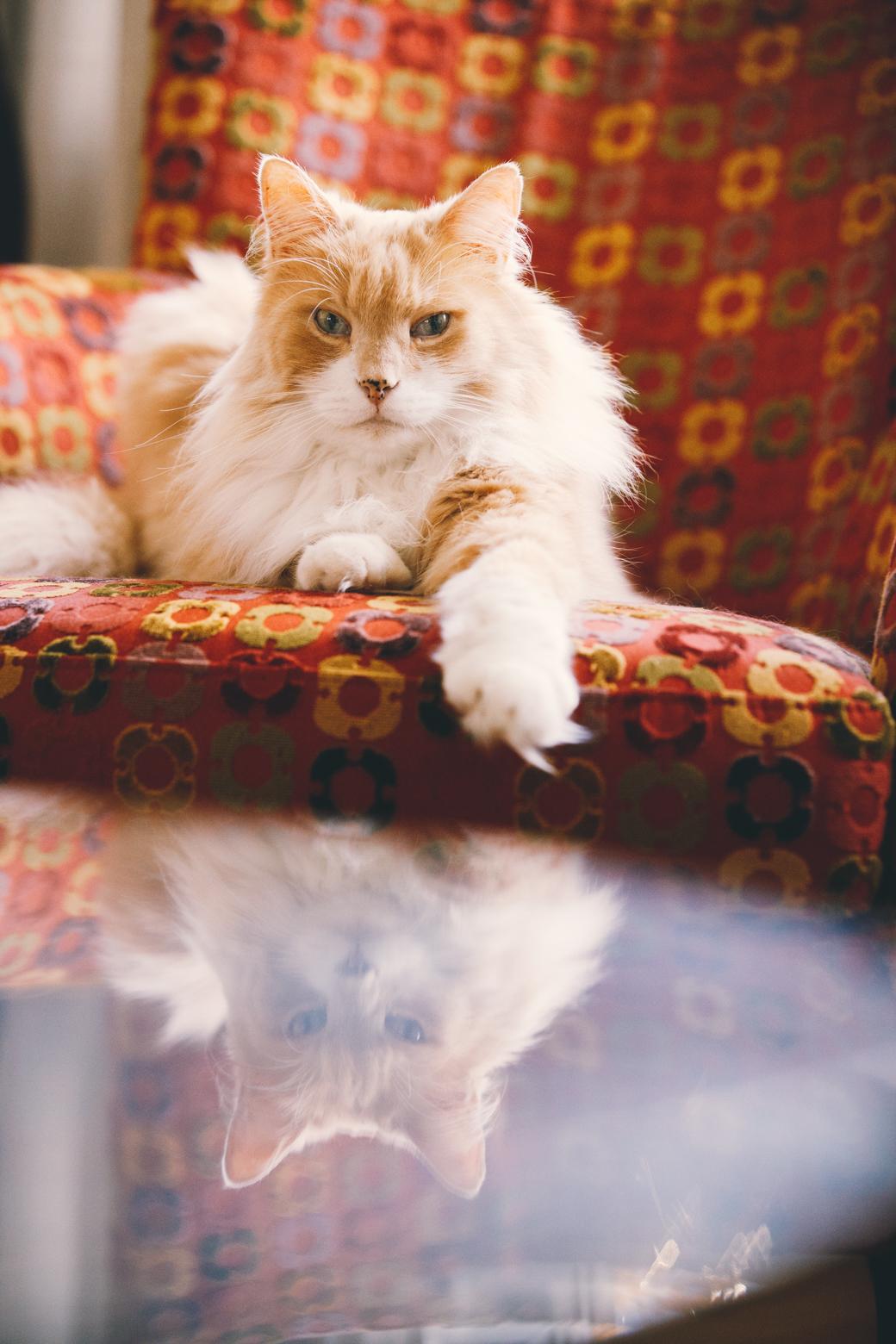 Kattenfotograaf Groningen
