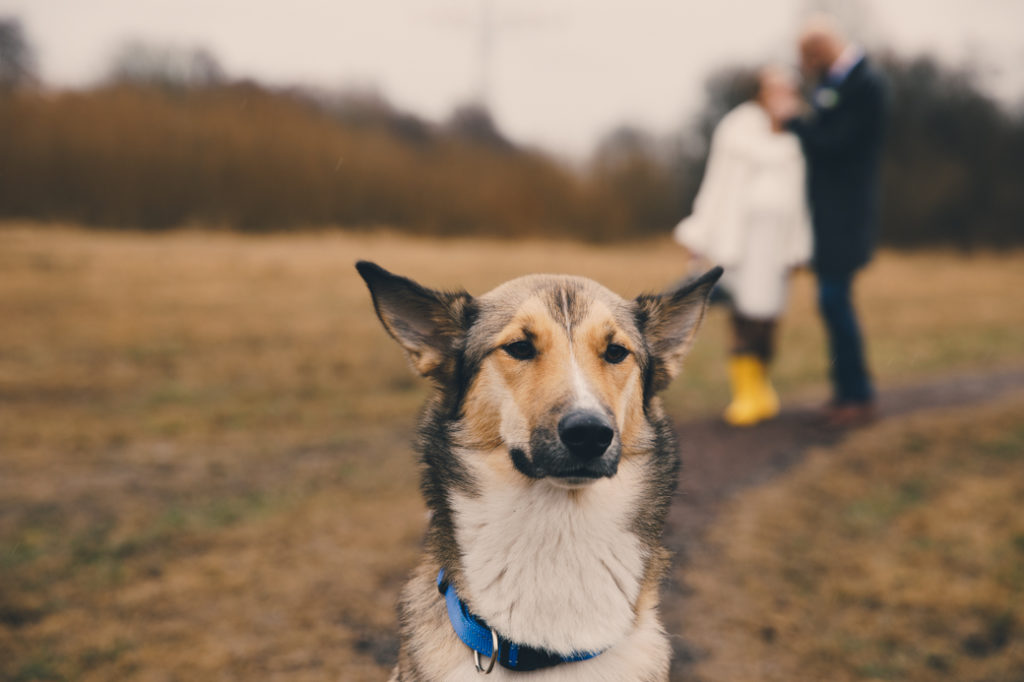 Hond op je bruiloft