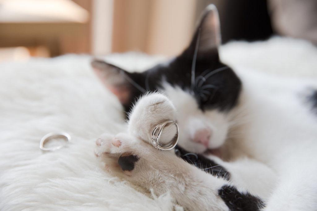 Kat met trouwringen