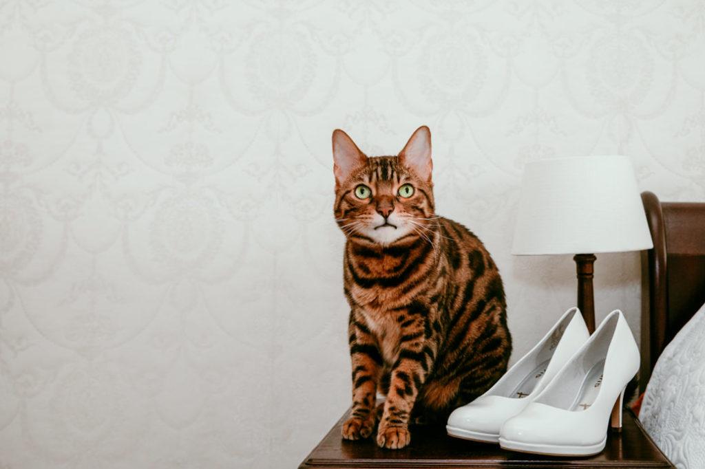 Kat bij trouwschoenen
