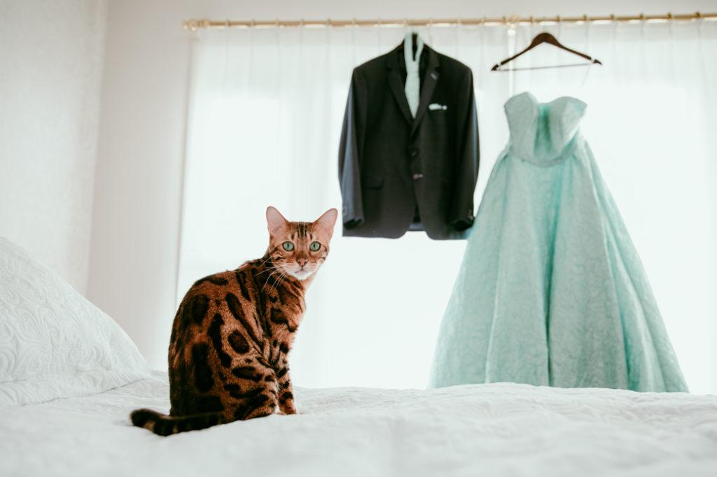 Kat bij trouwkleding